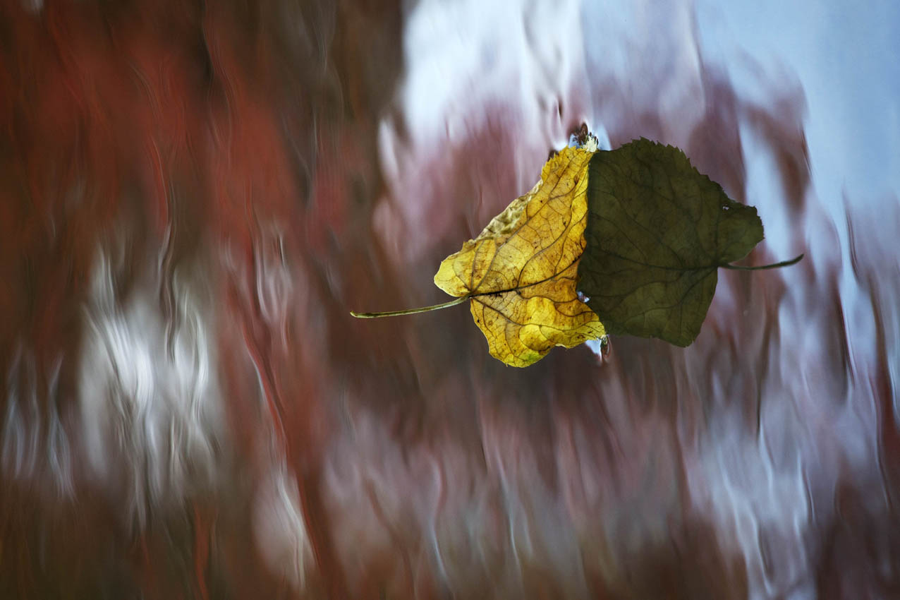 Foto Natur Kunst Reflexion Wasser