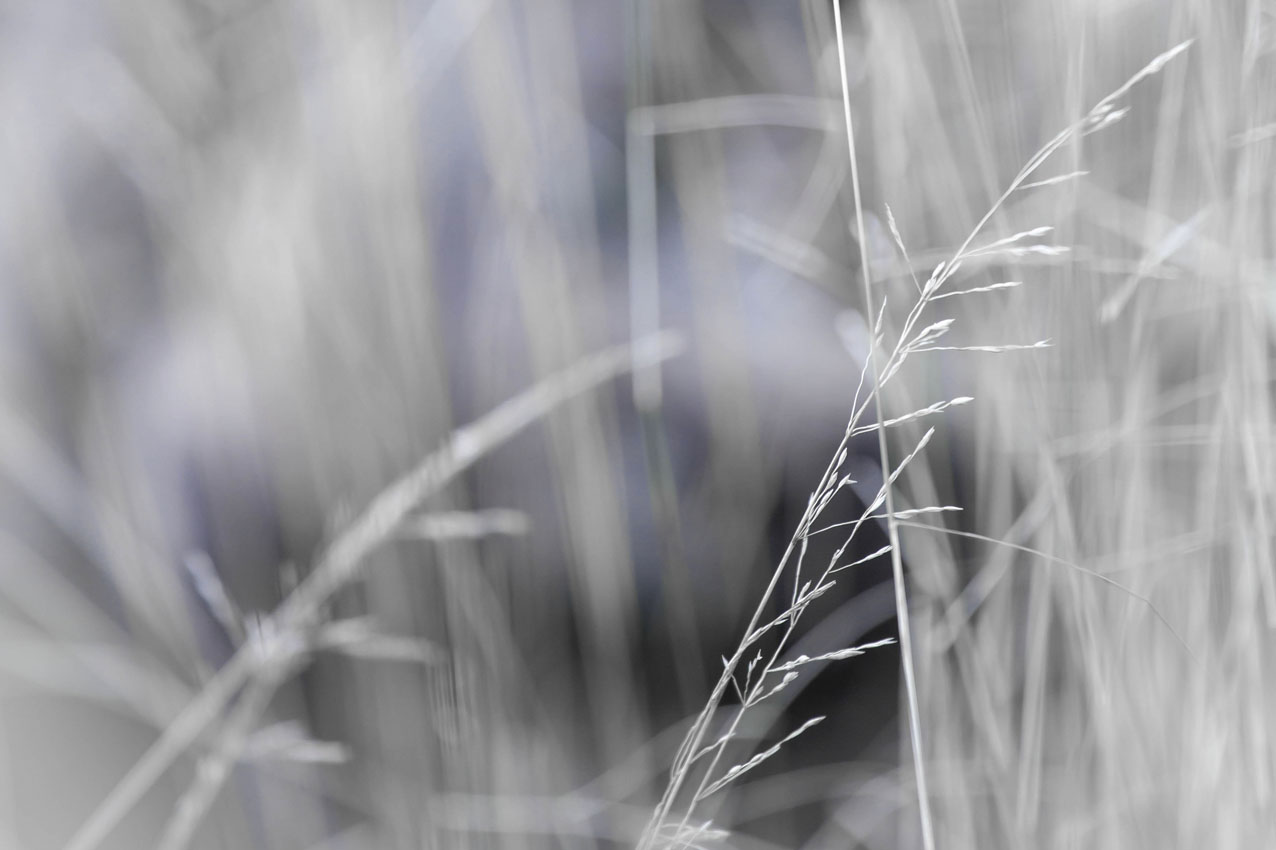 Foto Gras Meditation Kunst